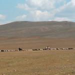 Mongolia_Jeanne Menjoulet & Cie